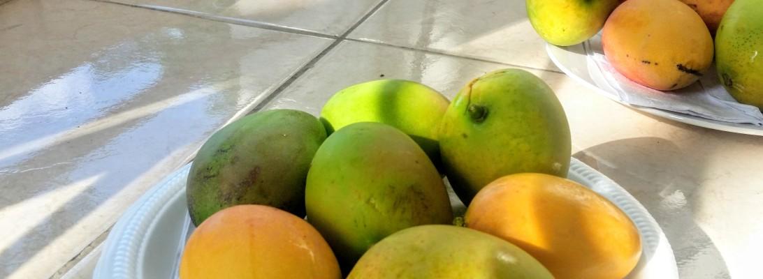 Few green-yellow mangoes in a dish